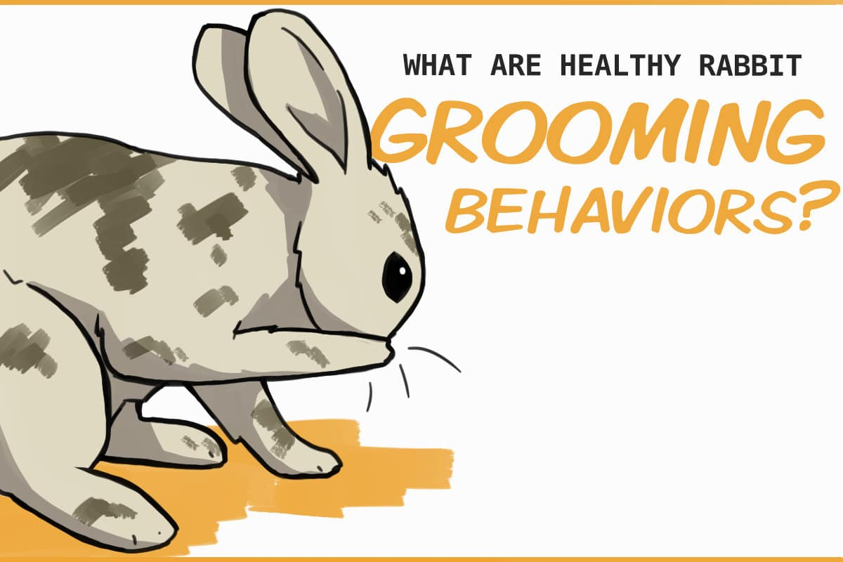 what are healthy rabbit grooming behaviors?