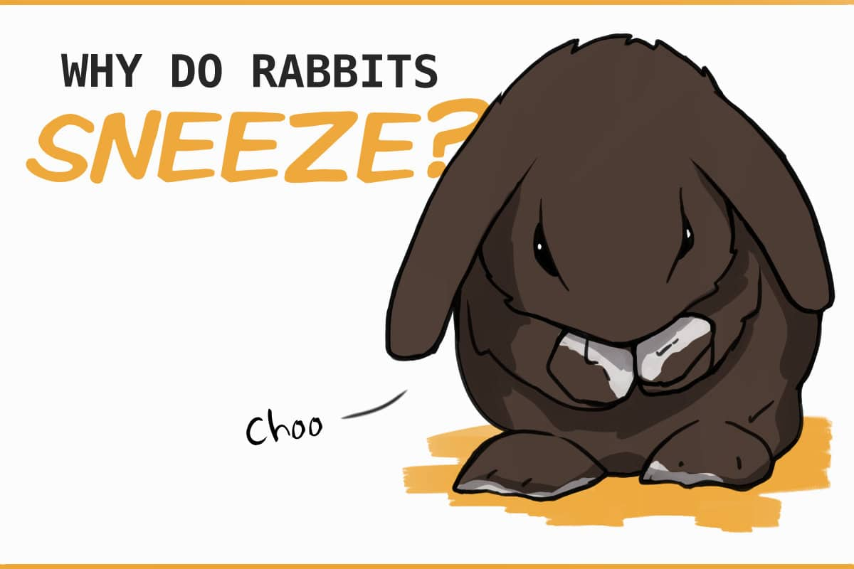why do rabbits sneeze?