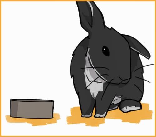 rabbit refusing pellets