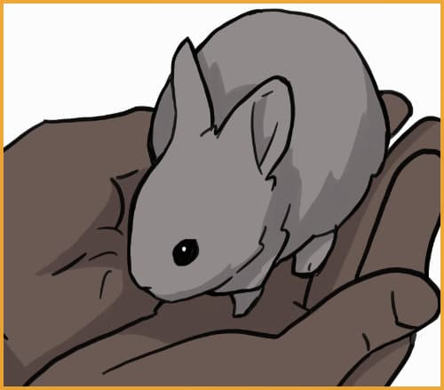 pygmy rabbit