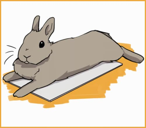 rabbit laying on a ceramic tile