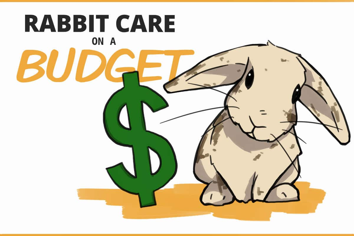 rabbit care on a budget