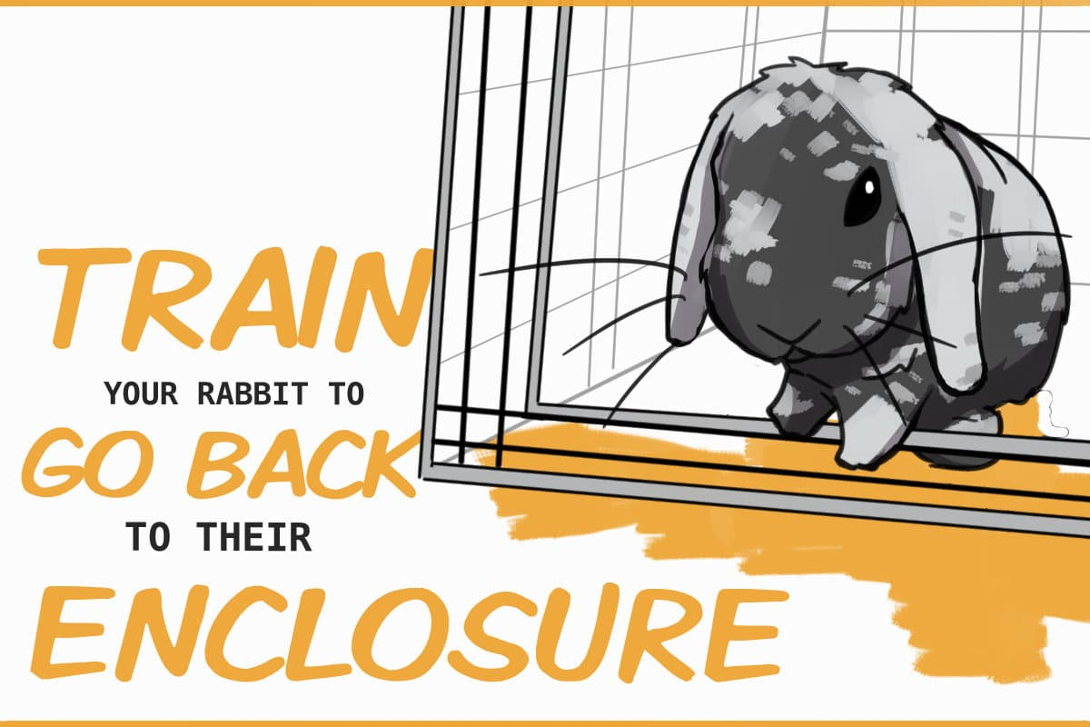 How to train your rabbit to go back to their enclosure