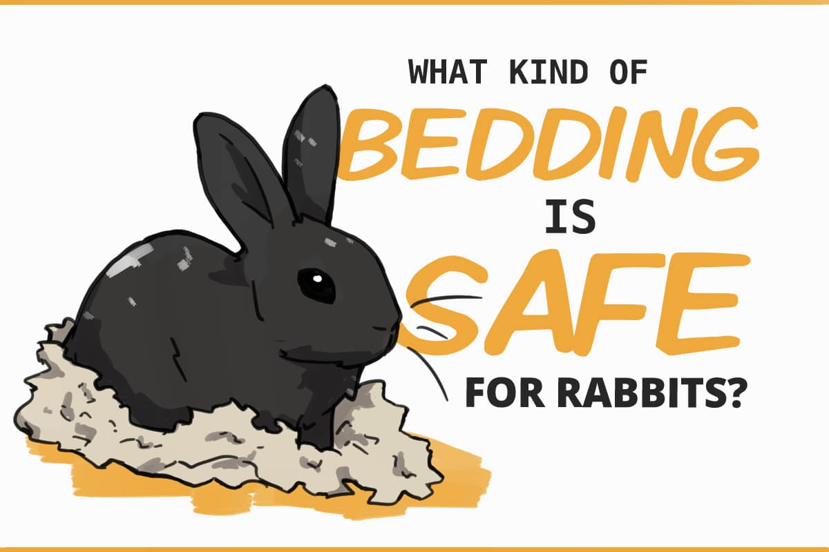 what kind of bedding is safe for rabbits?