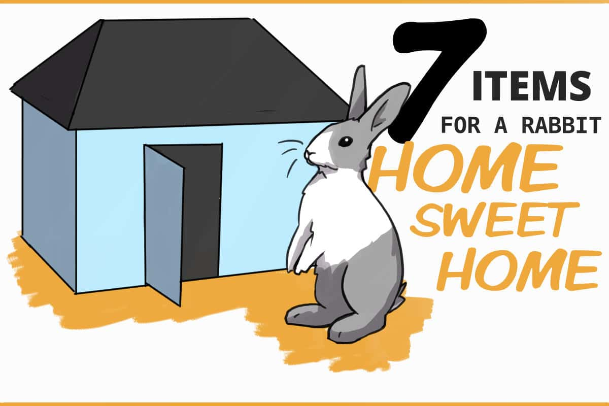 7 items for a rabbit home sweet home
