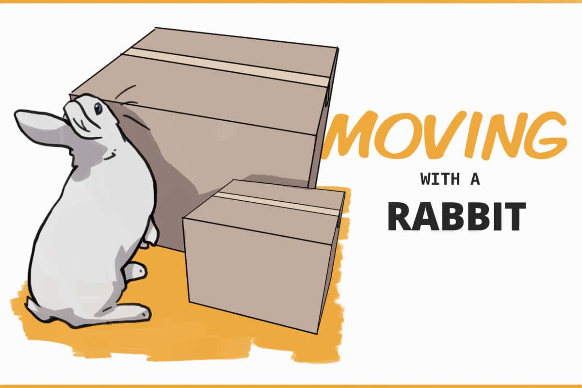 moving with a rabbit