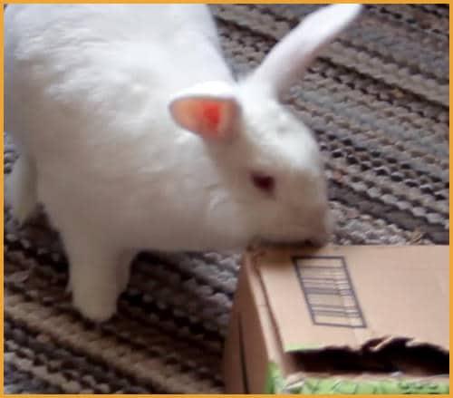 chewing a cardboard box