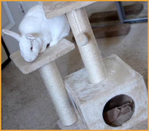 rabbit on a cat tower