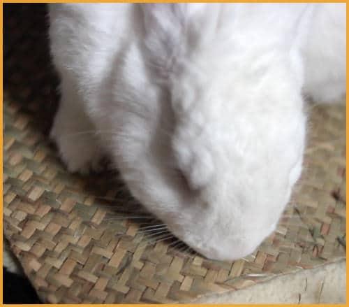rabbit on a grass mat
