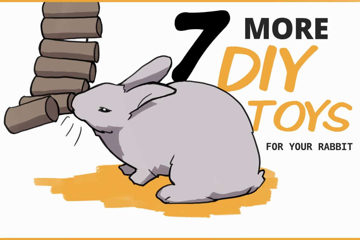 7 more DIY Toys for your rabbit