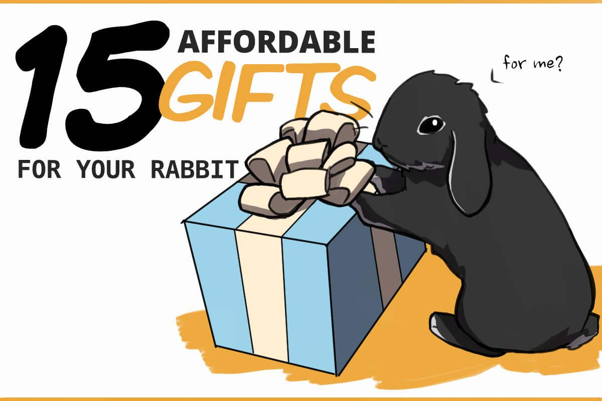 15 Affordable gifts for your rabbit