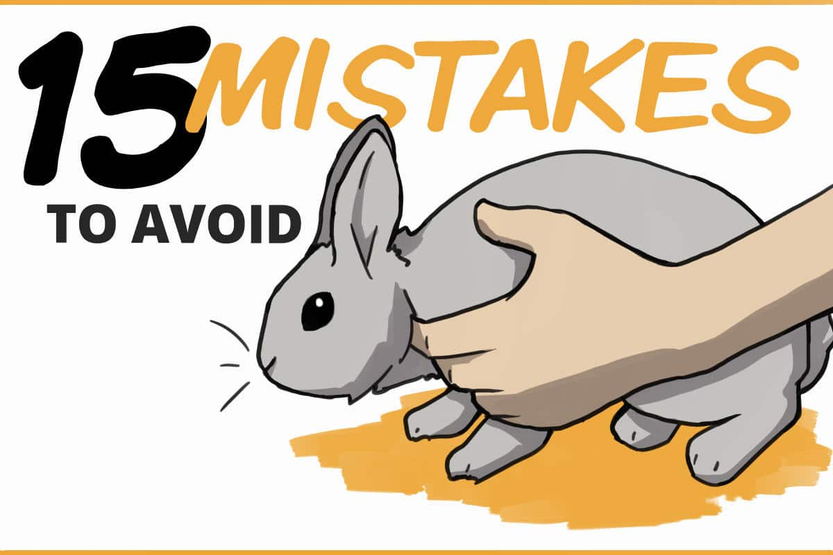 15 rabbit care mistakes to avoid