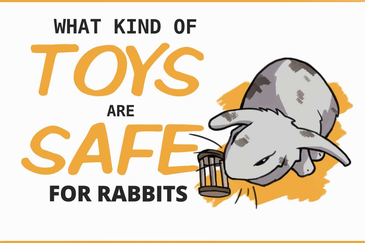 what kind of toys are safe for rabbits?