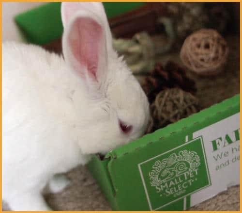 Small Pet Select Sampler box