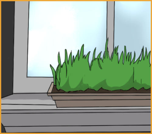 grass in the window