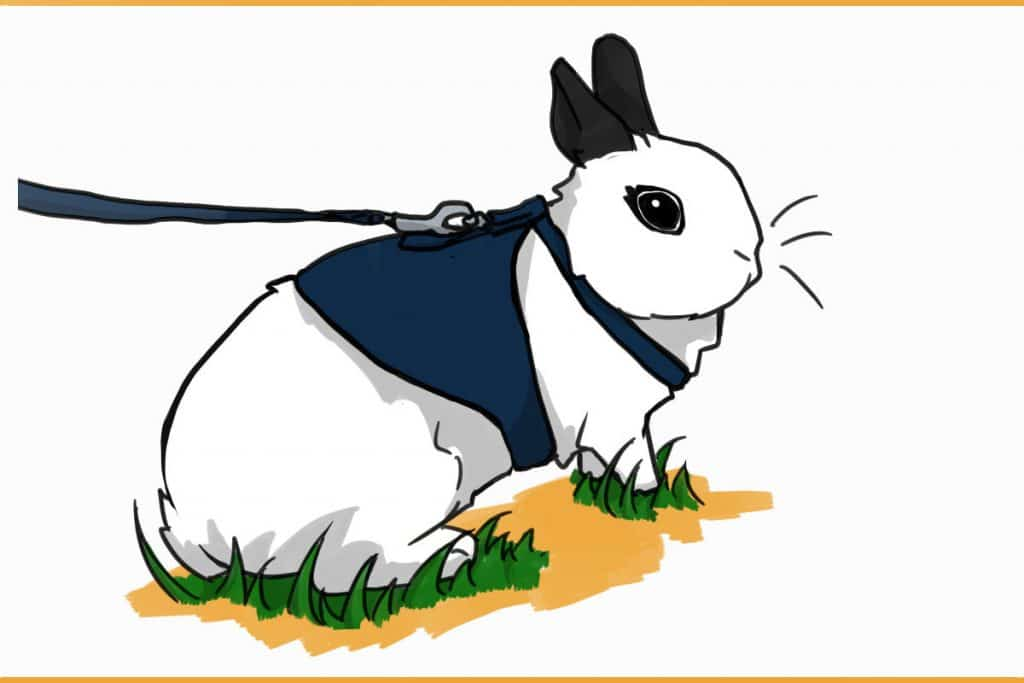 rabbit harnessed in the grass