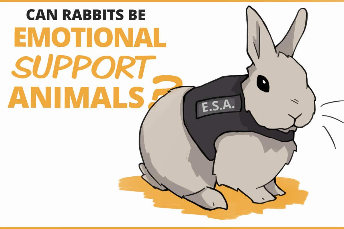 can rabbits be emotional support animals?
