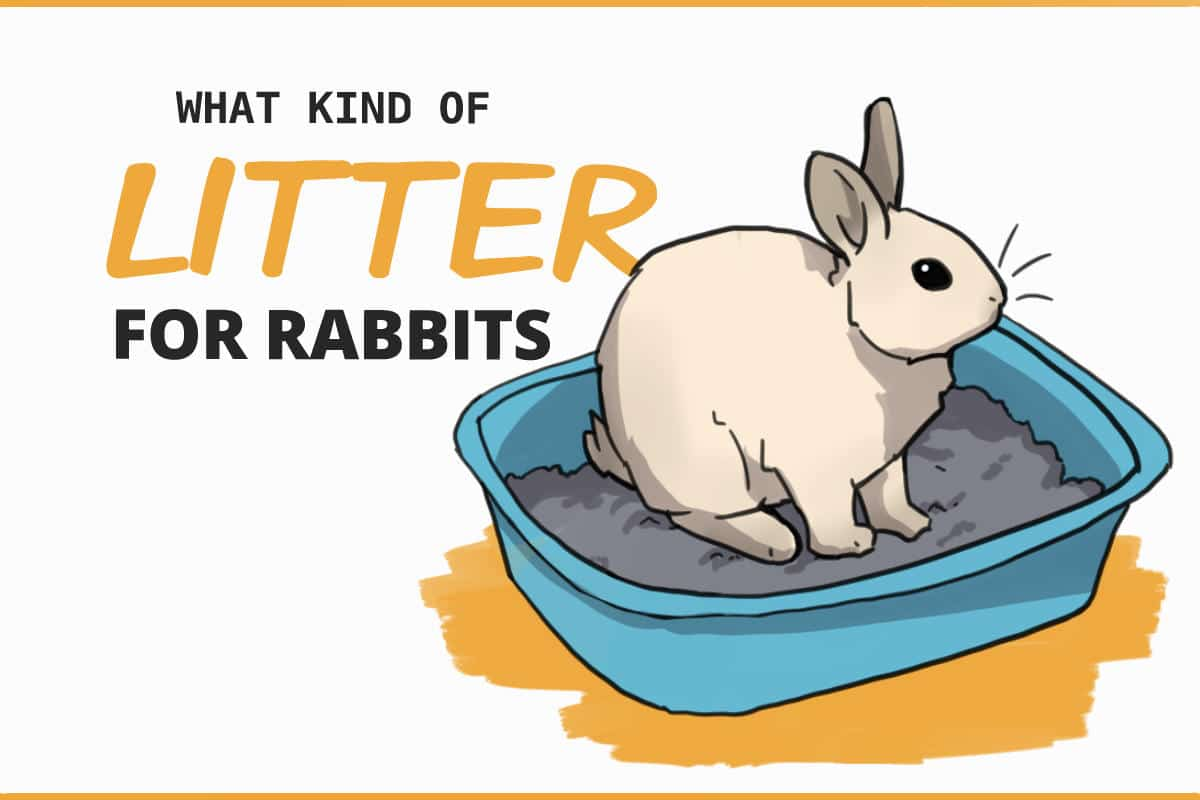what kind of litter for rabbits?
