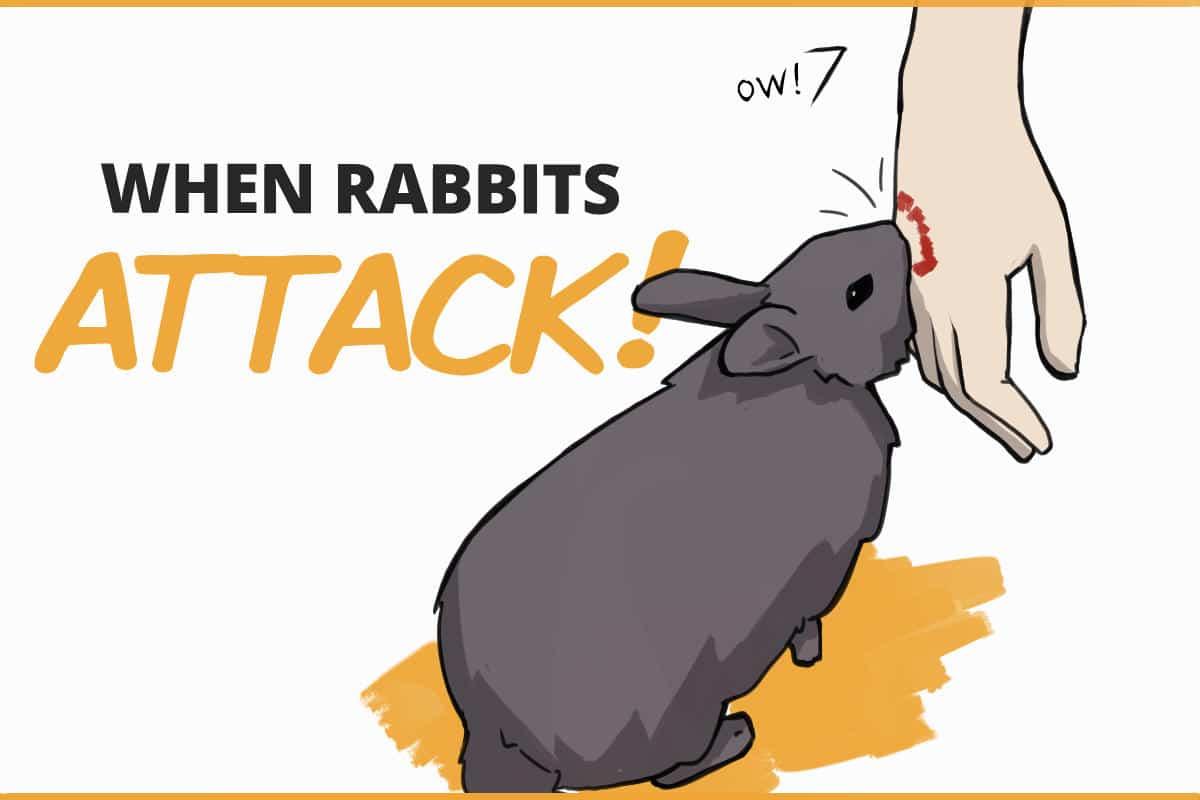 when rabbits attack!
