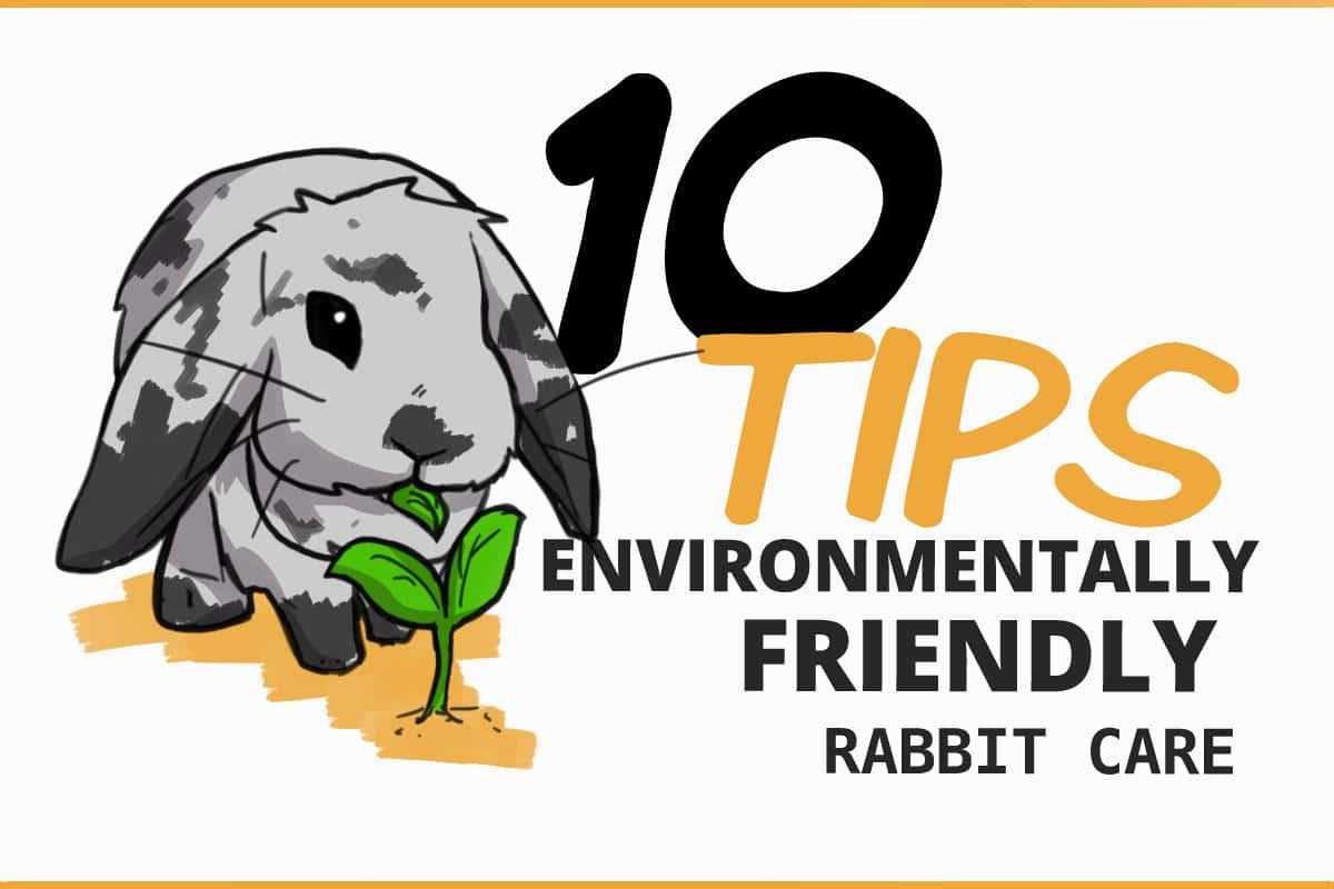 10 tips for environmentally friendly rabbit care