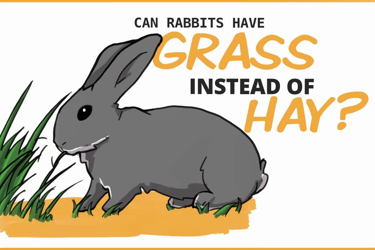 Can rabbits have grass instead of hay?