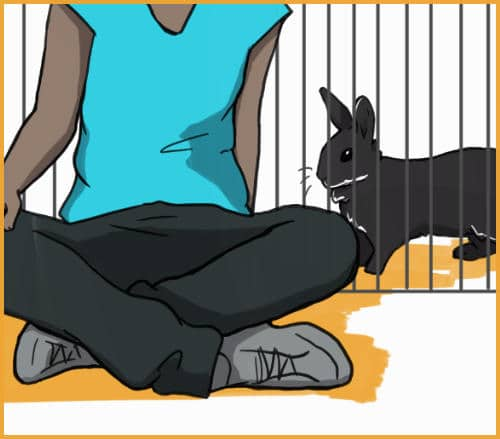 sitting with a rabbit through a fence