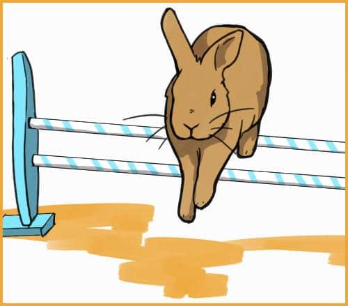 rabbit jumping hurdles