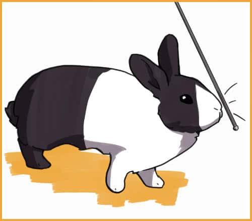 rabbit touching pointer