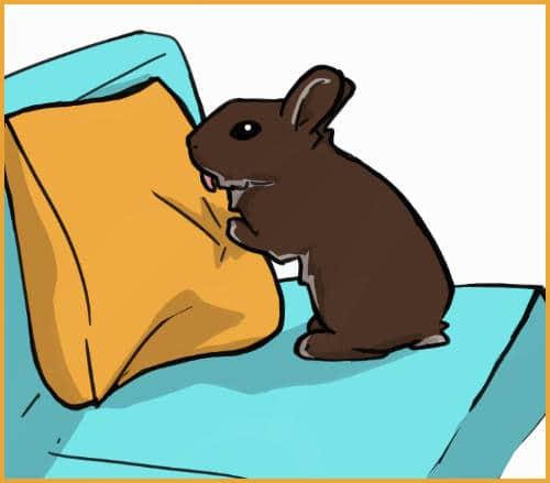 Rabbit licking a pillow