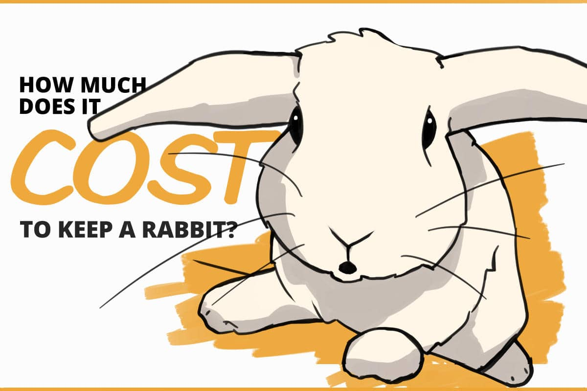 how much does it cost to keep a rabbit?