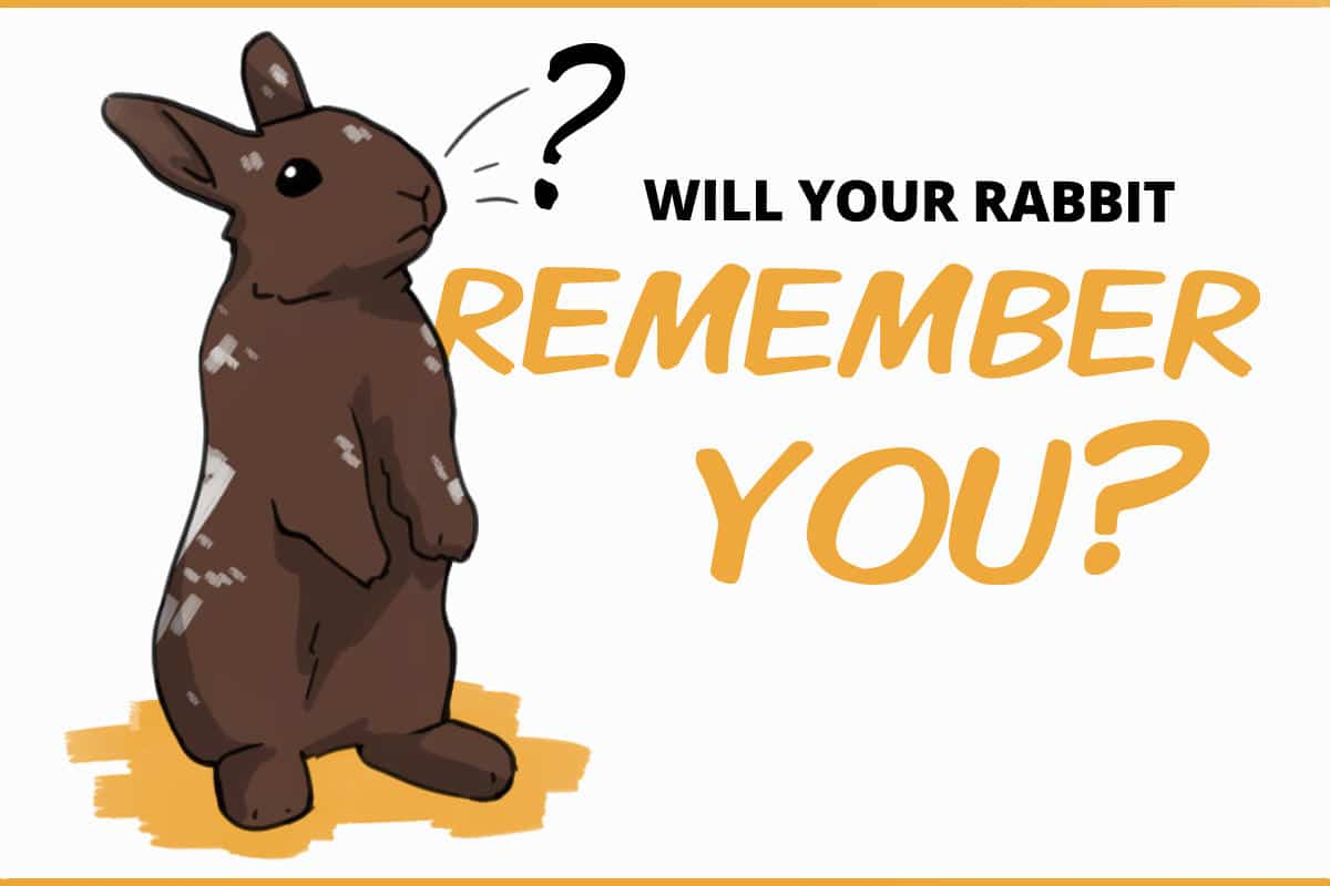 Will your rabbit remember you?