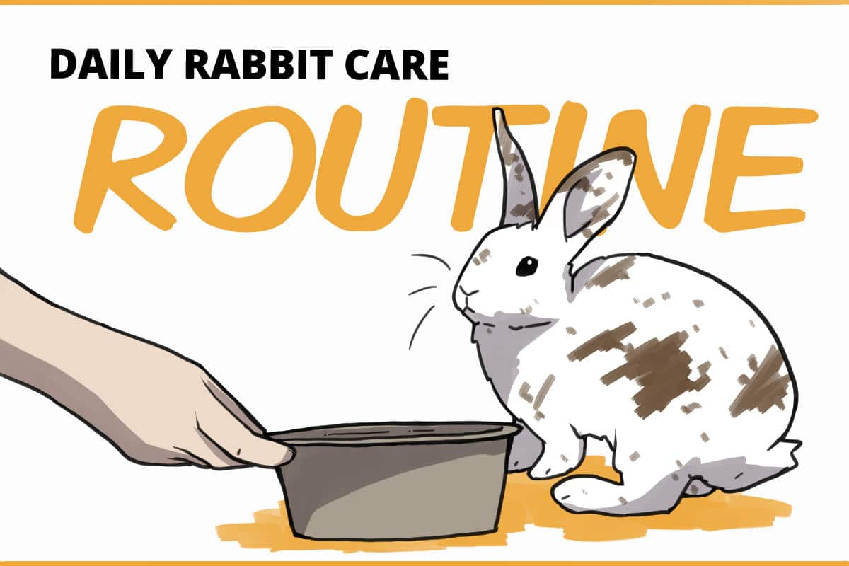 daily rabbit care routine