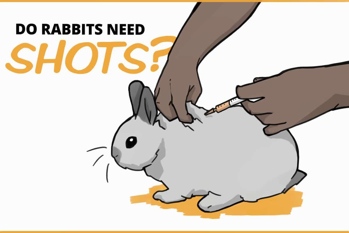 do rabbits need shots?