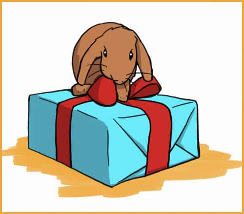 rabbit on a present