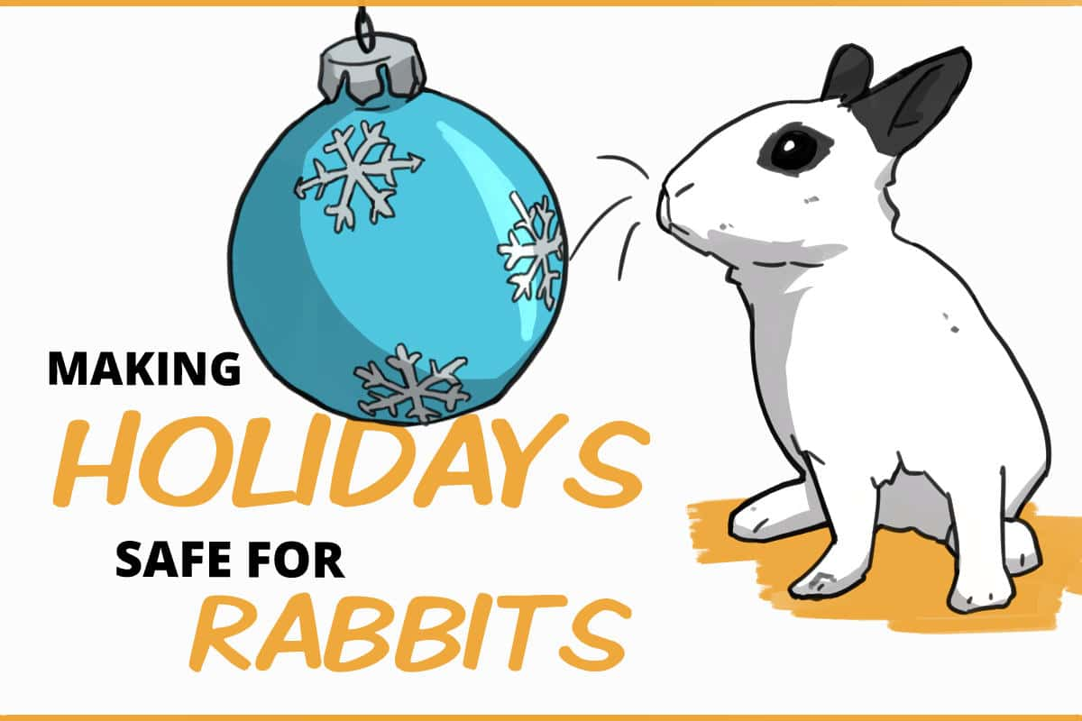 making holidays safe for rabbits
