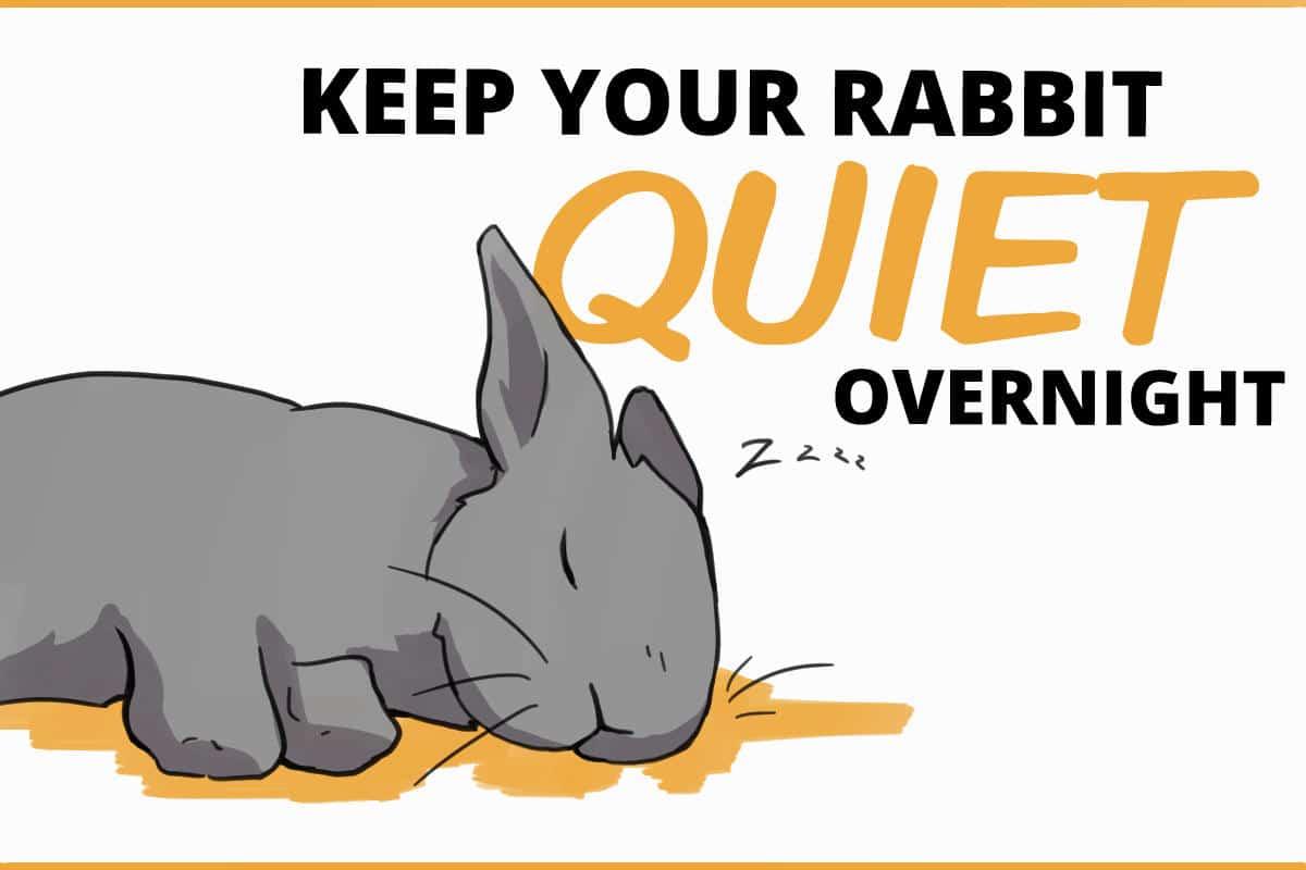 Keep your rabbit quiet overnight
