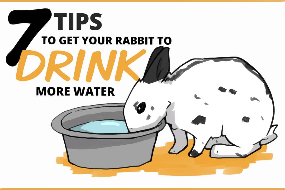 20 Ways to Encourage Your Rabbit to Drink More Water