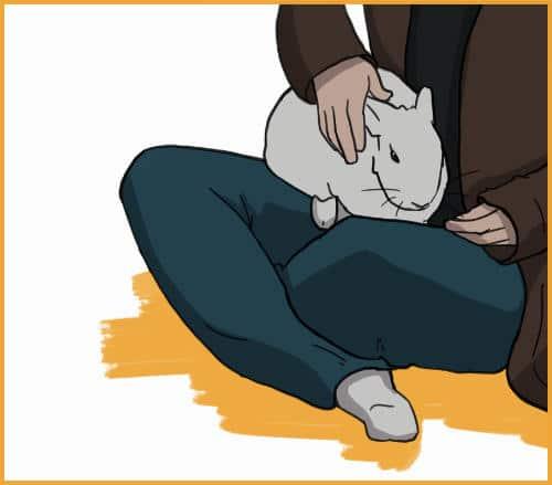 step4: pet your rabbit on your lap