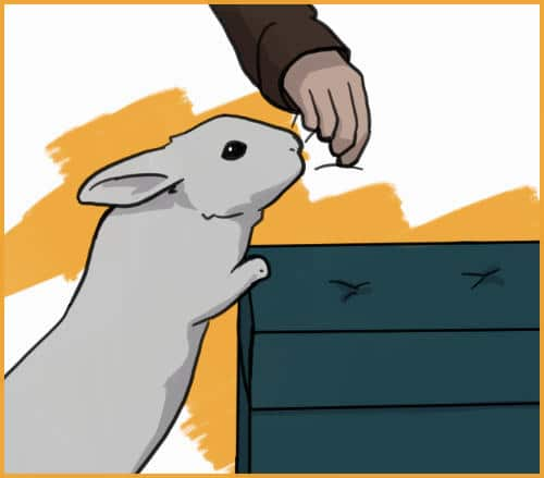 lead your rabbit up on surfaces