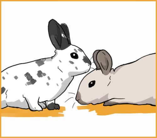 rabbit bowing head to other rabbit