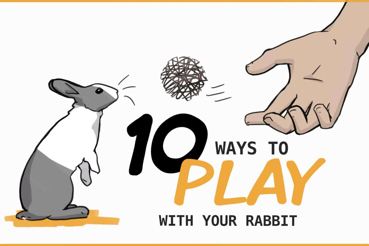 10 ways to play with your rabbit