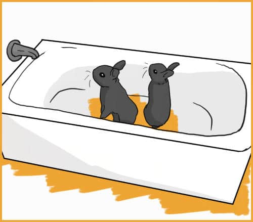 two rabbits in a bathtub