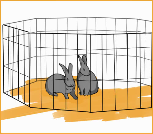 two rabbits in an ex-pet