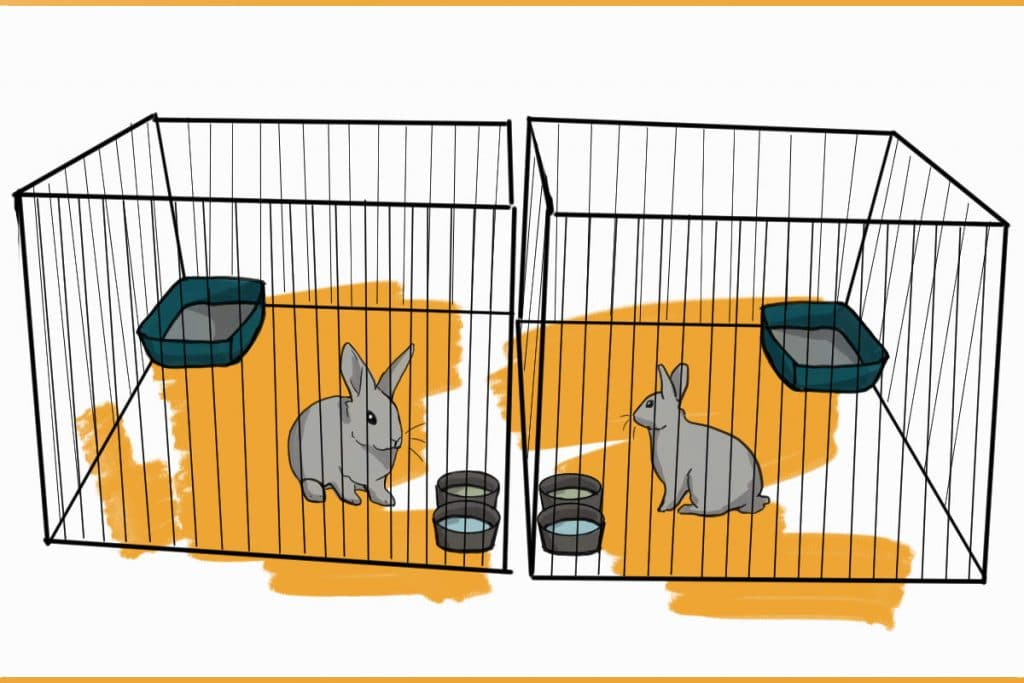 two rabbits in pens side-by-side