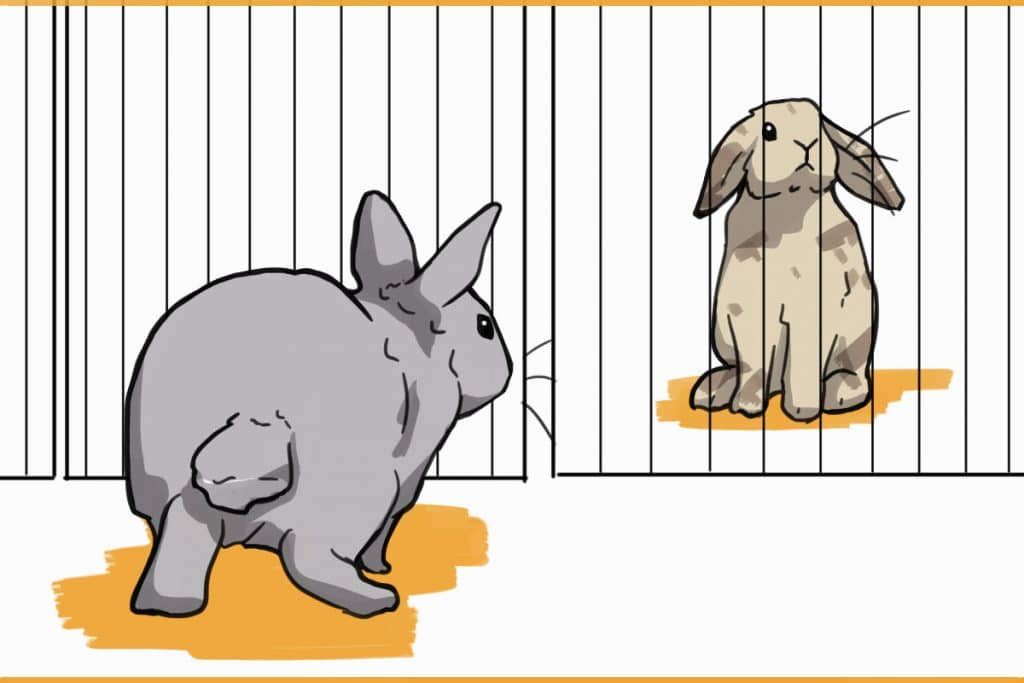 rabbits separated by a fence