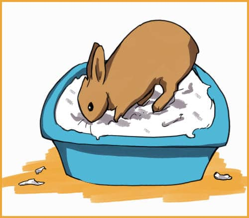 rabbit playing in bucket of snow