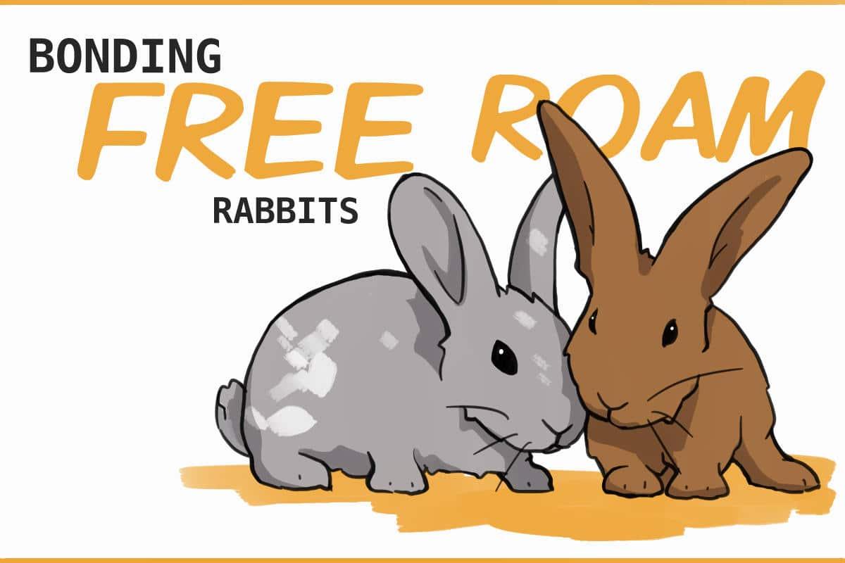 bonding free roam rabbits