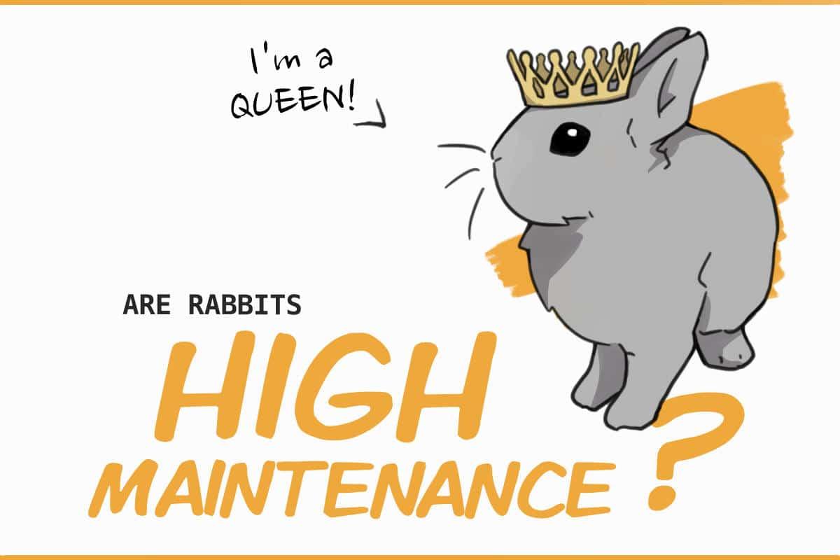 Are rabbits high maintenance pets?