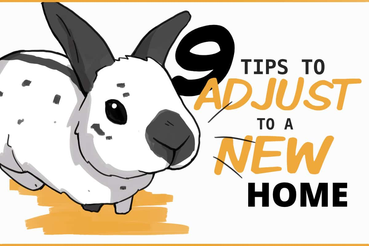9 Tips to adjust to a new home