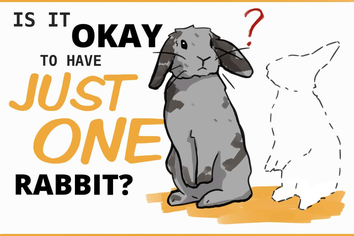 Is it okay to have just one rabbit?